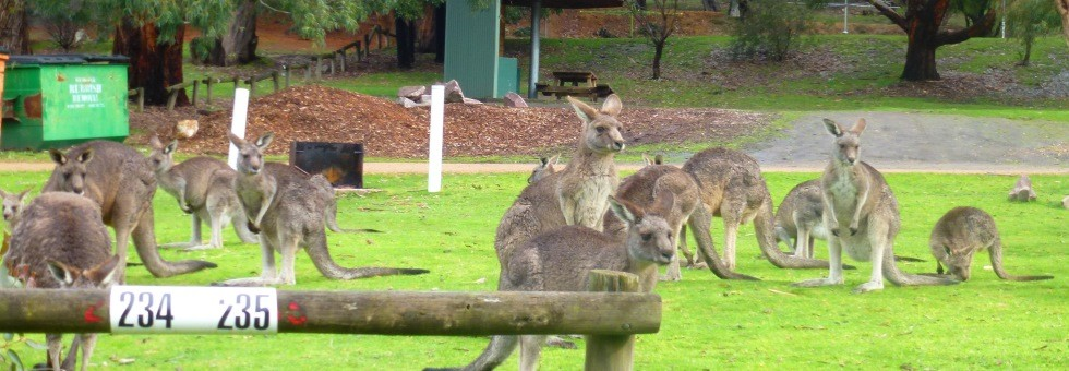 A Victorian Escape - Melbourne, Great Ocean Road & the Grampians