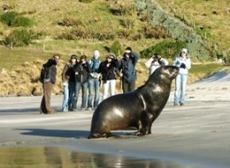 Otago Peninsula Wildlife Encounter