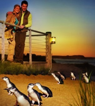 Penguins, Koalas & Wildlife