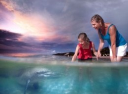 Tangalooma Dolphin Adventure Day Tour